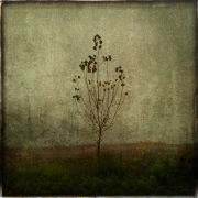13_Le petit arbre