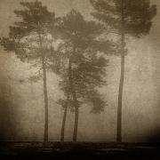 16_les petits pins