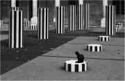 Le-chat-de-Buren