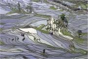 Rizieres-du-Yunnan-N°4