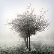 2 - Perdue dans la brume
