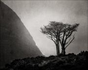 19_L'arbre