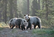 Les_3_ours