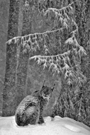 Sous_la_neige