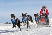 16 Musher chevronne