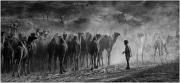 4-Gilles_Bordes-Pages_Camel_caravan