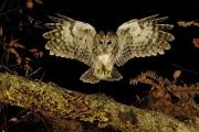 8-Fabrice_Simon_Retour_de_chasse_nocturne_Diplôme_Zoologie