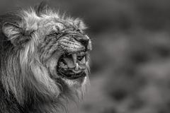 141909006401_lion mention spéciale 3e