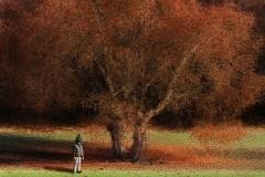 2-Véronique_Xantopoulos_L'enfant_et_l'automne