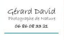 GerardDavid
