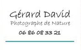 GerardDavid2